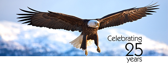 Photo of eagle
