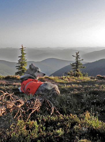 Photo of Bella in Selkirk Mountains