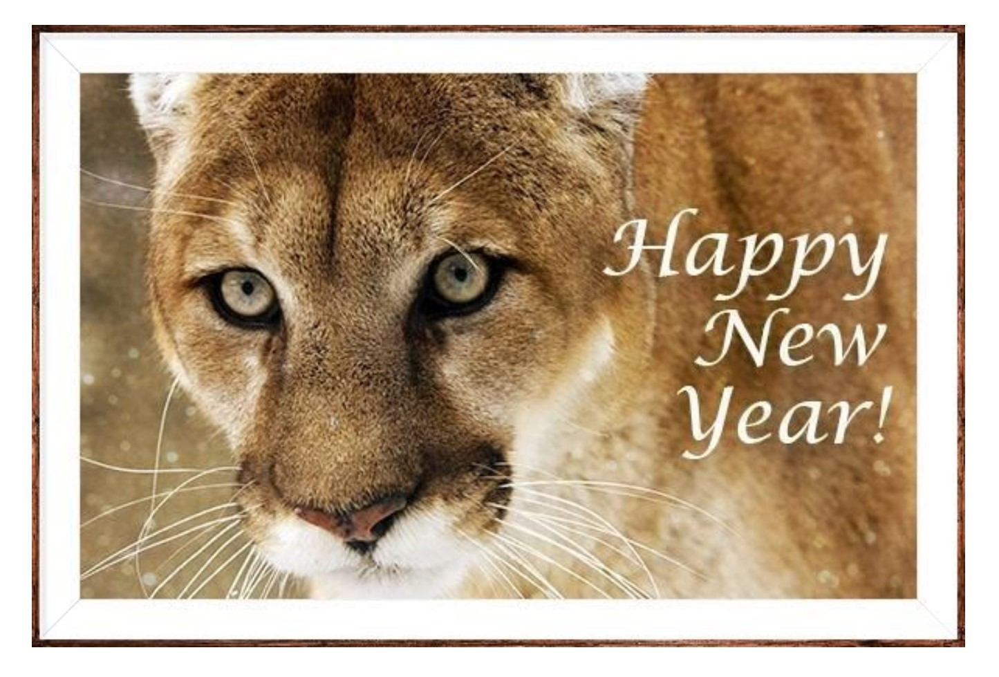 Cougar photo - Happy New Year