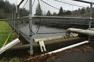 Photo of fish hatchery where Fritz died in trap