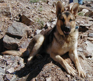 Sharyn Aguiar's dog Max, killed by M-44 poison in 2006